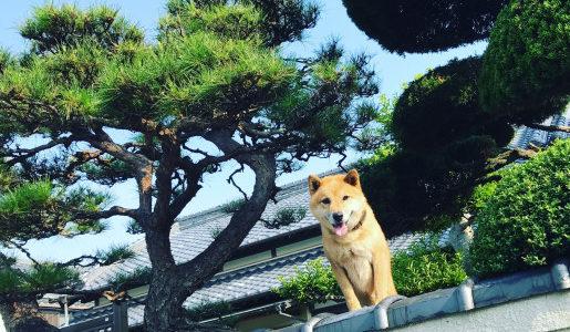 いえづくり教習所 番外編③「素敵すぎる町に住む、素敵すぎる人々。高知県本山町に行って来ました(前編)」